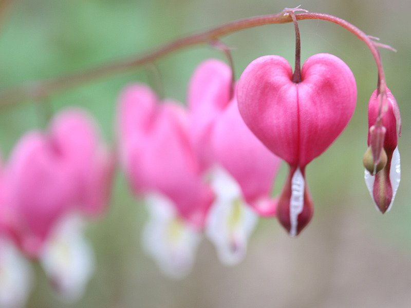 Don Sutherland Spring Love