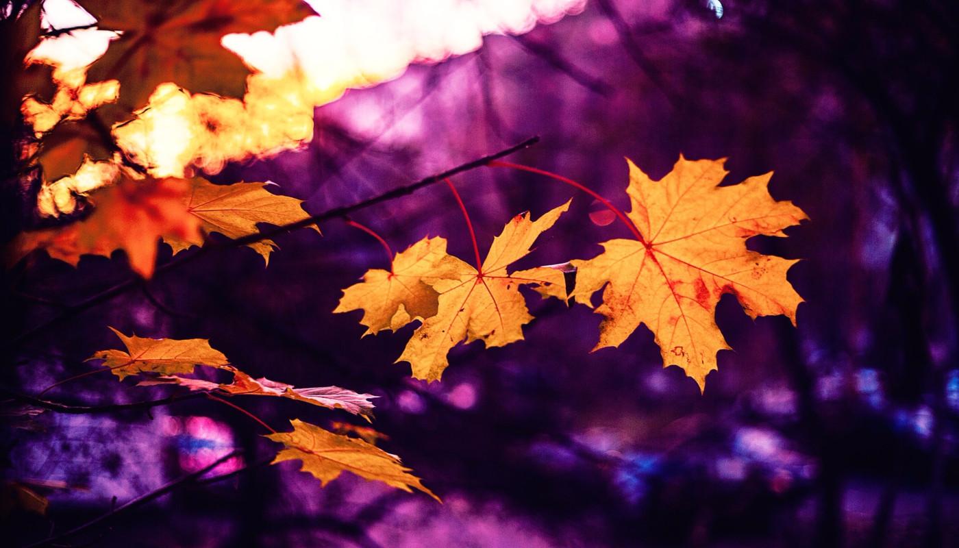 Autumn invites us to slow down