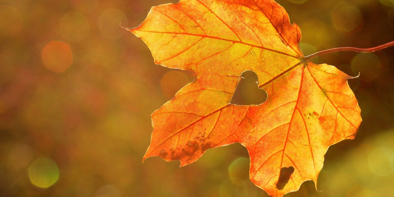 Why Autumn Is The Season Of Spirit
